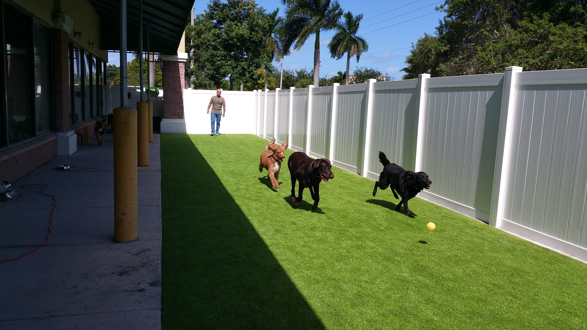 Dog Day Care In Boynton Beach Fl